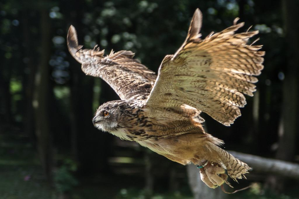 My not so wildlife Birds of prey
